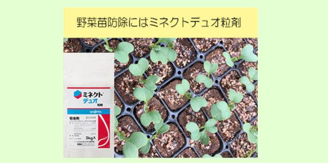 ミネクトデュオ粒剤で苗管理 アイキャッチ