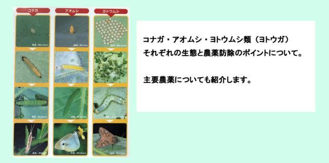 チョウ目害虫の見分け方 コナガ アオムシ ヨトウムシ アイキャッチ