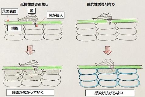 抵抗性誘導剤イメージ
