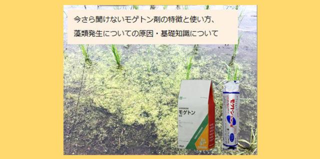 モゲトン剤の特長と使い方 藻類発生について アイキャッチ