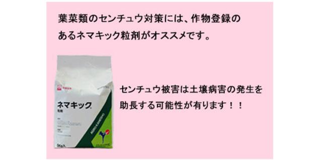 センチュウ対策 ネマキック粒剤のすすめ アイキャッチ