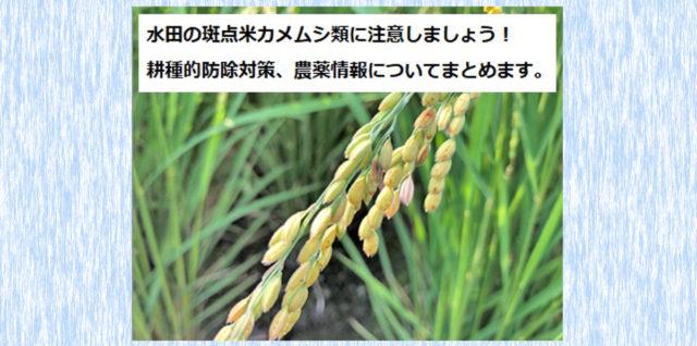 斑点米水稲 防除対策 アイキャッチ