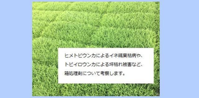 水稲箱処理剤についての考察 アイキャッチ