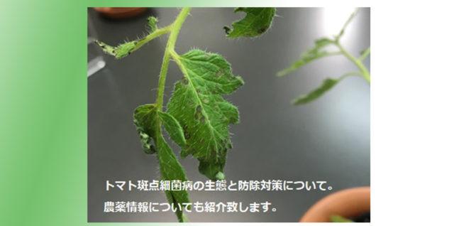 トマト斑点細菌病 生態 防除対策 アイキャッチ