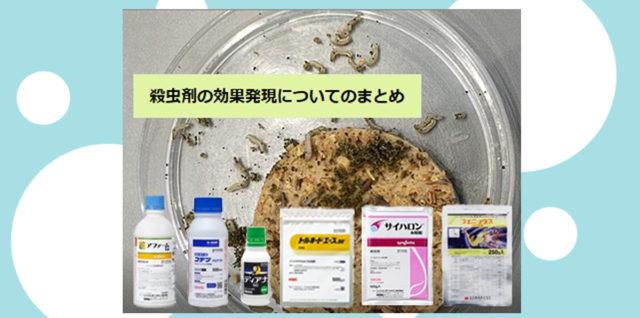 殺虫剤の効果について アイキャッチ