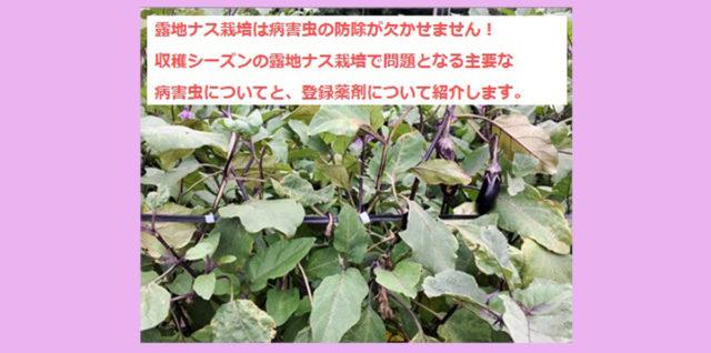 露地なす 収穫時期 病害虫防除対策 アイキャッチ