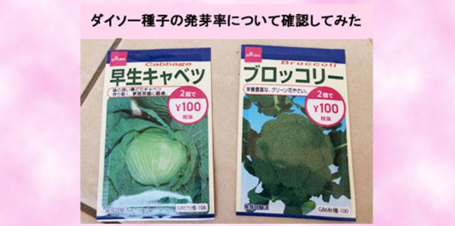 ダイソー野菜種子 発芽率検証 アイキャッチ