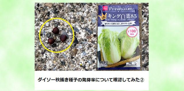 ダイソー 野菜種子 白菜 発芽率確認 アイキャッチ